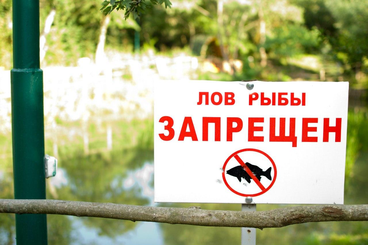 Когда заканчивается запрет на ловлю рыбы в казахстане