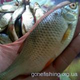 рибка моя
