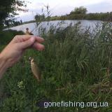 Рыбалка на КАРПА летом ǀ КАРП НА ПОПЛАВОК ǀ маленькое и КЛЁВОЕ озерцо