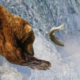 Ведмежа рибалка