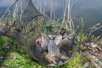 Садок риби