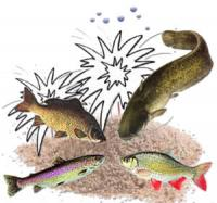 Вплив запаху на рибу