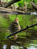 Особливості весняної ловлі риби на вудку з боковим кивком і мормишкою
