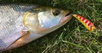 ловля білої риби на спінінг