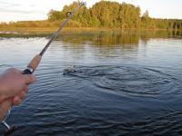 Ловля риби на спінінг