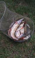 Результат рибалки на Оселі 14.09.2011