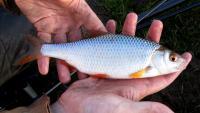 Ловля риби на польового коника