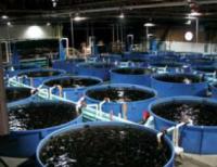 Винайшли екологічно чисті системи рибництва