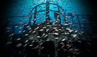 Риба біля затонулого корабля