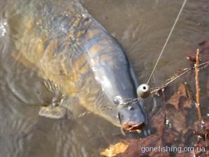 Як приготувати горох та мастирку для ловлі коропа та іншої риби?