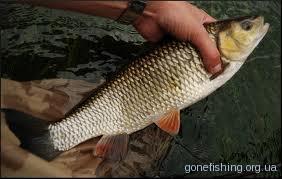 Ловля риби в серпні