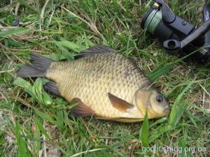 Як правильно приготувати геркулес для ловлі риби