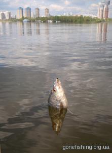 Ловля риби влітку на мормишку