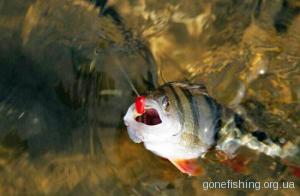 Ловля риби на мормишку по відкритій воді