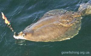Основи морської рибалки: ловля камбали