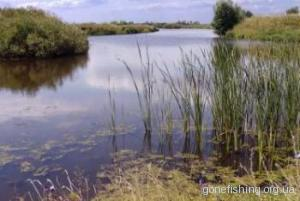 Місце ловлі коропа на річці