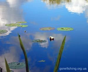 Перспективне місце для риболовлі