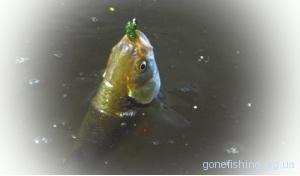 Ловля риби на водорослі