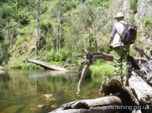 Ловля риби на комах