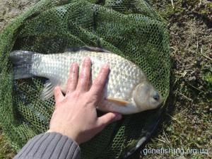 Напівдонка - снасть для ловлі риби на течії