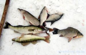 Ловля риби в лютому