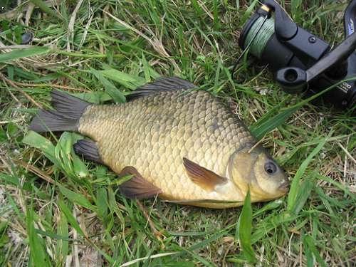 геркулес прикормка для рыбы