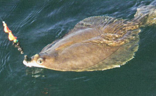 где ловить рыбу в лазаревском