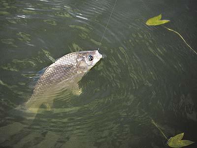 прикормка для риби